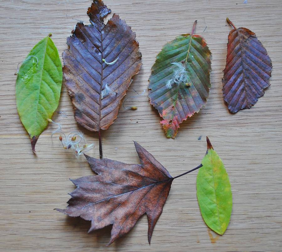 Leaves for leaf wedding confetti