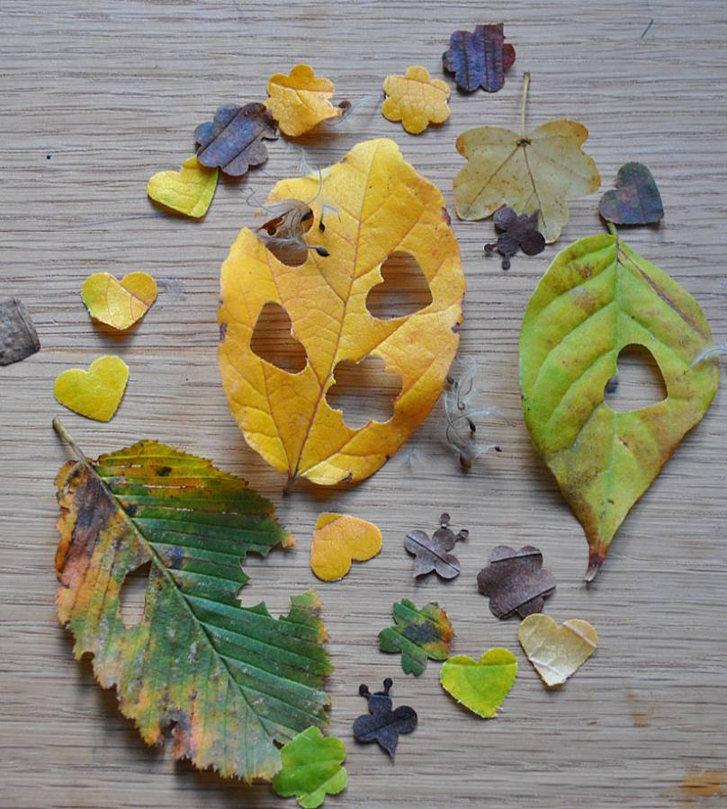 Make Your Own Leaf Wedding Confetti Biodegradable Confetti