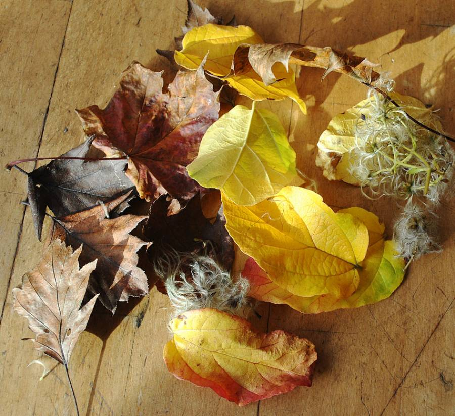 Leaves for making leaf wedding confetti