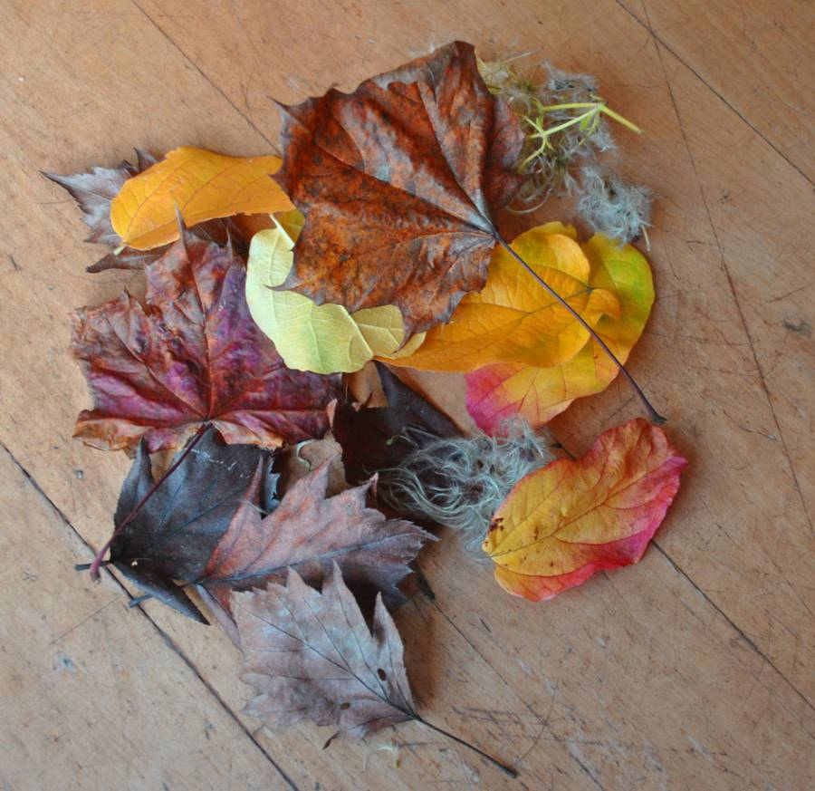 Leaves for making wedding confetti