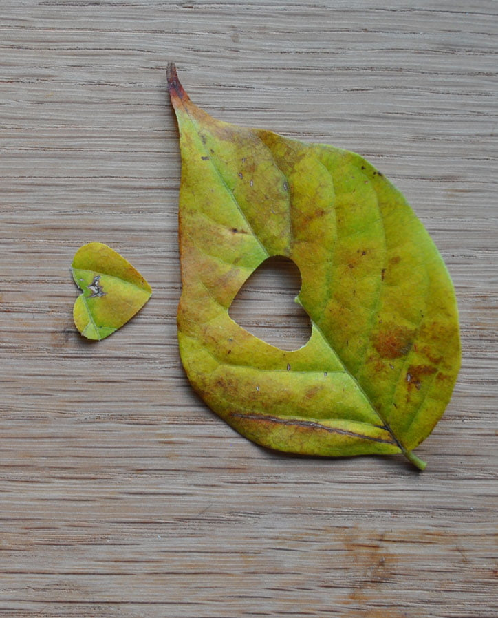 leaf-confetti-8